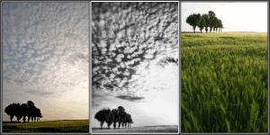 Figure-2-©ericheymans-300x150