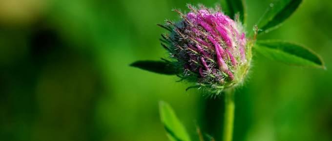 Photographie Macro - Fleur