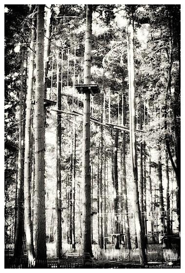 """Contre-jour. Image """"lumineuse et contrastée"""" - © Eric Heymans"""